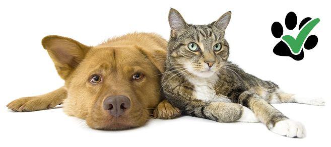 Case e appartamenti che accettano animali